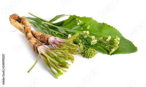 Fotografiet Horseradish, Armoracia rusticana, Cochlearia armoracia