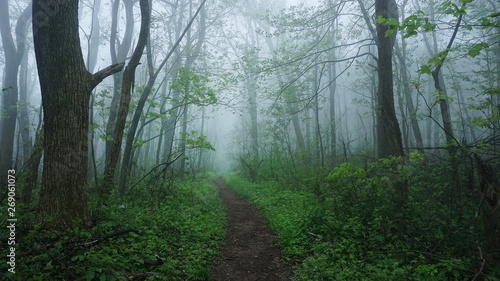 Fényképezés A foggy view of the Appalachian Trail in the Shenandoah Mountains of Virginia