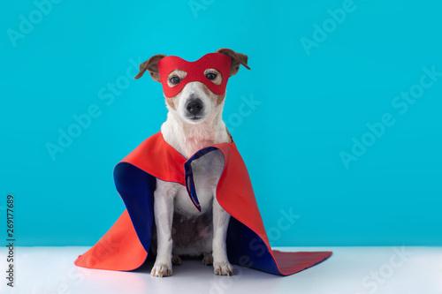 Vászonkép Dog super hero costume