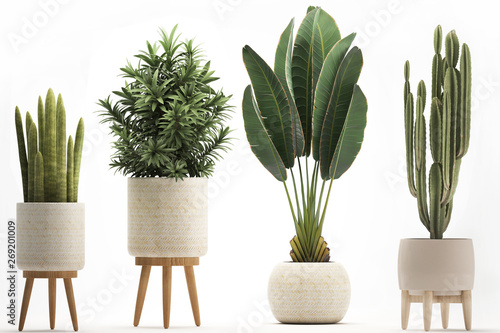 Wallpaper Mural collection of ornamental plants in pots