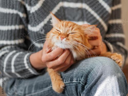 Cute ginger cat dozing on woman knees Fototapet