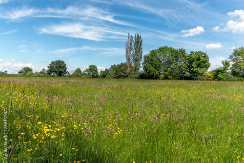 Fototapeta Prairie en fleur au printemps