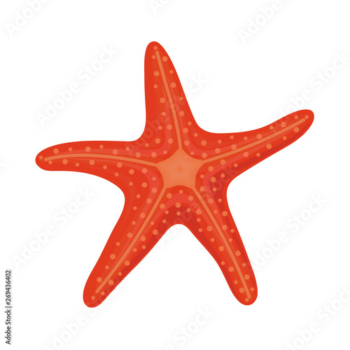 Obraz na plátně Red starfish in cartoon style for summer design elements isolated on white backg