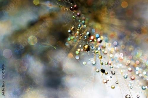 Wallpaper Mural rain drops on glass