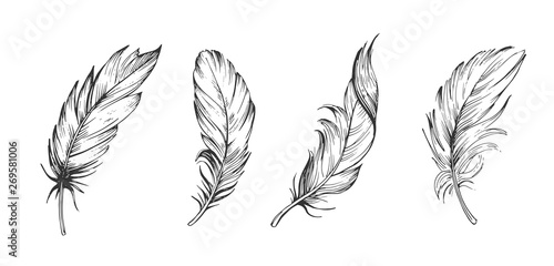 Fotografiet Set of bird feathers