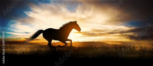 Canvas Print Free horse run at sunset