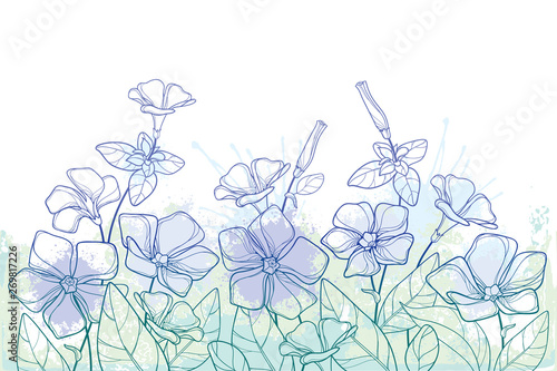Fotografia Bouquet with outline Periwinkle or Vinca flower bunch and ornate leaves in pastel green and blue isolated on white background