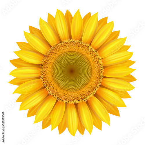 Realistic beautiful bright yellow sunflower blossom isolated