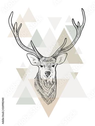 Wallpaper Mural Hand drawn head of deer. Scandinavian style