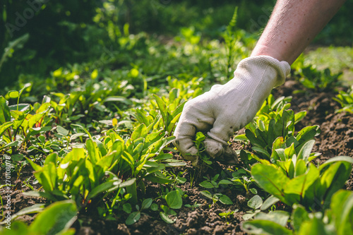 A woman weeds her hands in the gloves of a plant in the garden