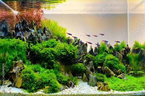 Foto Image of landscape nature style aquarium tank.