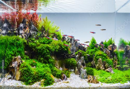 Fotografija Image of landscape nature style aquarium tank.