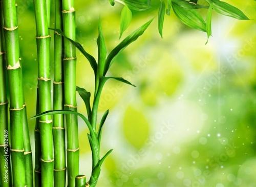 Many bamboo stalks  on background