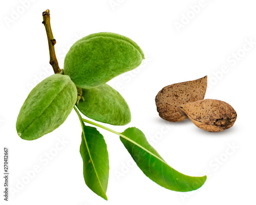 Canvas Green almond branch and fruits or nuts isolated on white background