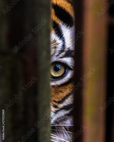 Canvas-taulu Eye through Captivity
