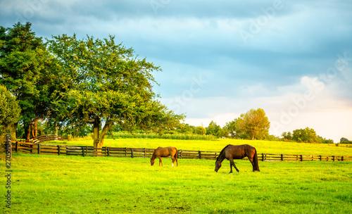 Fotografie, Obraz Two horses grazing on a farm in Central Kentucky