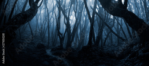 Tablou Canvas Deep tropical forest in darkness