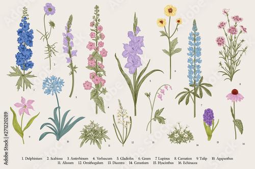 Photo Garden flowers. Set. Vintage vector botanical illustration.