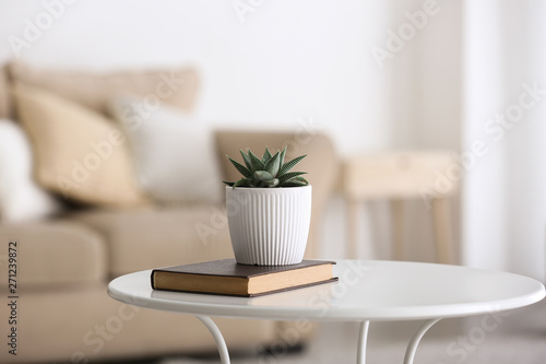 Obraz na płótnie Green succulent in pot with book on table in room