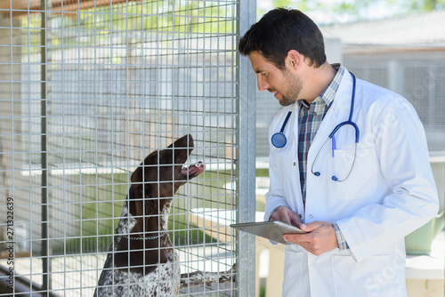 Photographie convalescent dog in veterinary clinic