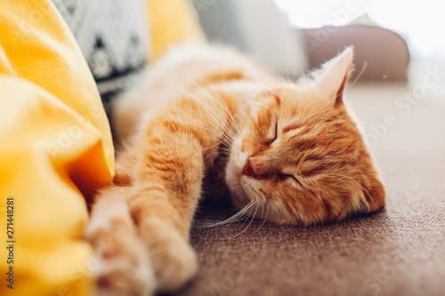 Ginger cat sleepng on couch in living room surrounded with cushions Fototapeta