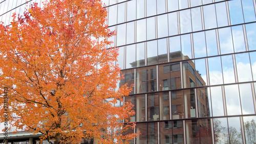 Fotografija orange colour leaves tree next to modern building