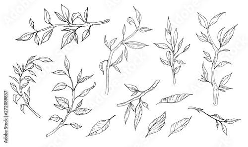 Cuadros en Lienzo Sketch of branches