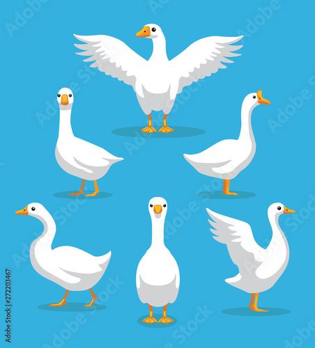 Fotografie, Tablou White Goose Poses Cartoon Vector Illustration
