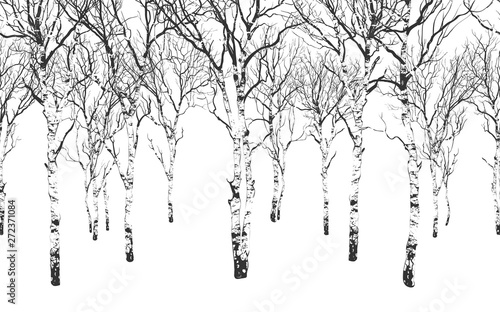 Canvas Print Birch Grove