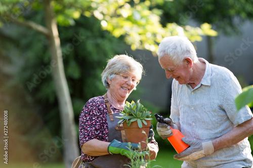 Senior couple potting plants Fototapeta