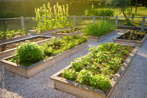 Fotografija Community kitchen garden
