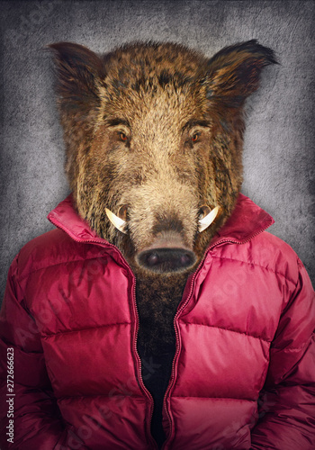Boar in clothes Poster Mural XXL