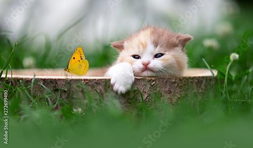 Photo Kitten mit Schmetterling relaxt im Garten