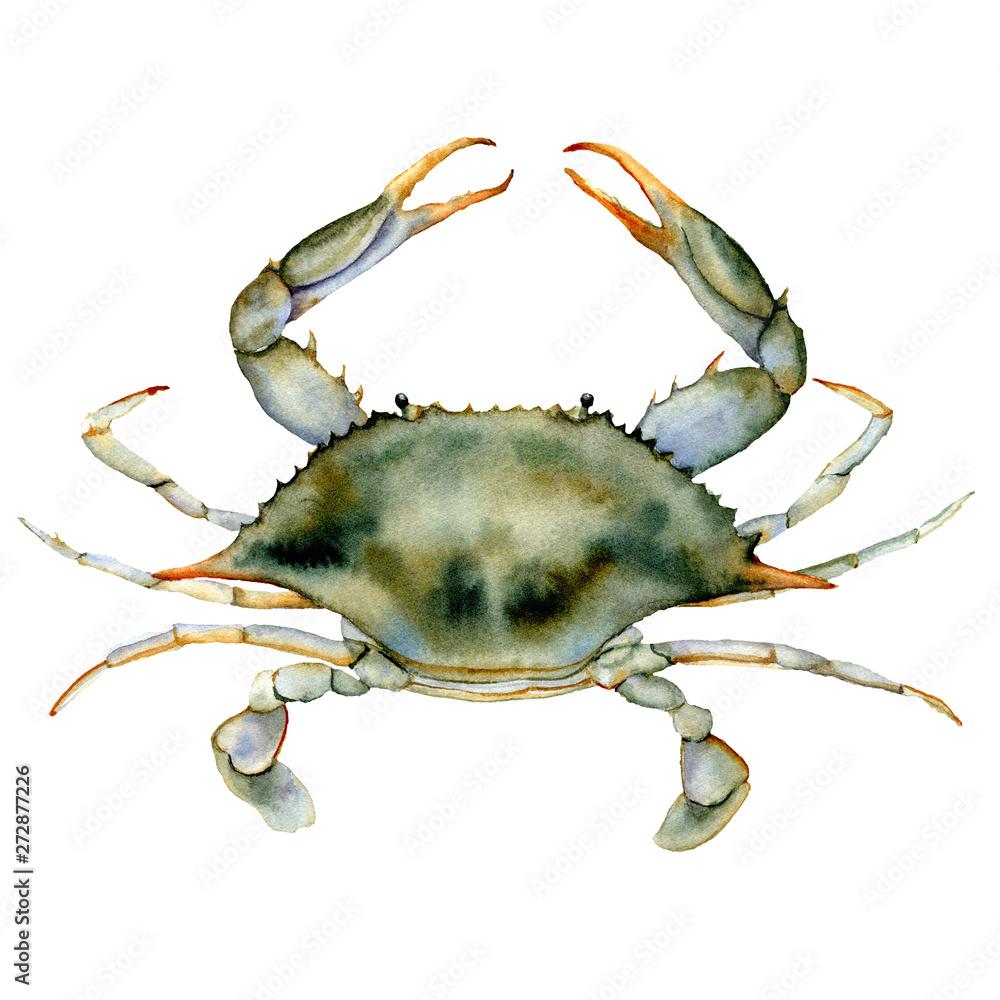 Watercolor Blue crab. Underwater animal illustration isolated on white background. For design, prints or background. <span>plik: #272877226   autor: yuliya_derbisheva</span>