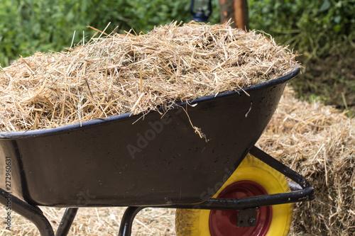 Photographie wheelbarrow with freash hay to feed Horses
