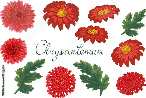 Wallpaper Mural Vector floral illustration with chrysanthemum