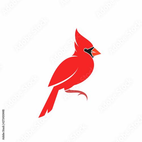 Fényképezés Northern cardinal