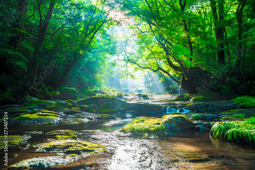 Canvas Print Kikuchi valley, waterfall and ray in forest, Japan