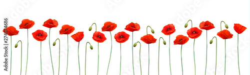 Nature summer background with red poppies. Vector.