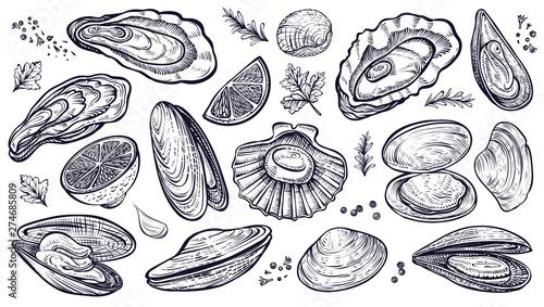 Fényképezés Shellfish seafood, vector hand drawn set