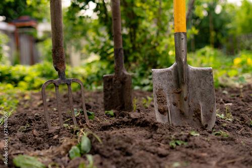 Obraz na plátne inserted shovel and pitchfork into the ground in the garden
