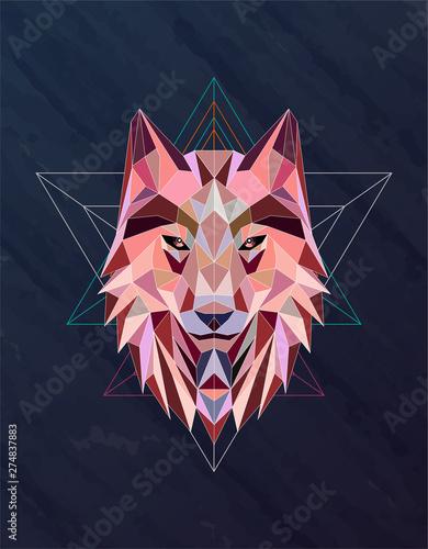 Fototapeta Colorful abstract polygonal wolf head