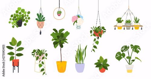 Canvas Print Set of macrame hangers for plants growing in pots