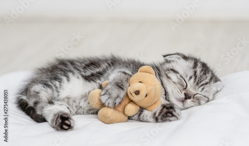 Fotografie, Obraz Baby kitten sleeping with toy bear on pillow at home