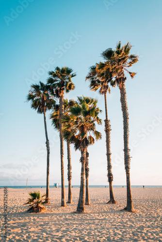 Fotografia Palm trees on the beach in Santa Monica, Los Angeles, California