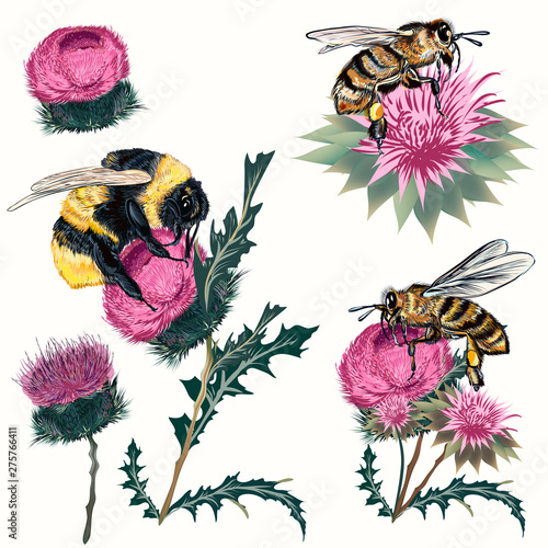 Fotomural Collection of high detailed vector bee, bumblebee and thistle isolated on white