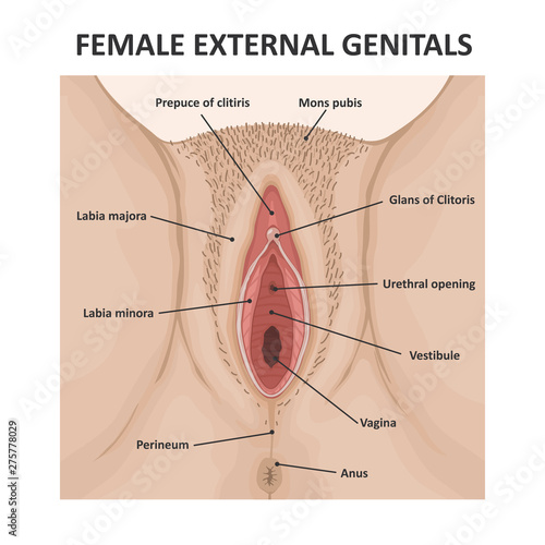 Canvas Print Female external genitals. Medical poster female anatomy vagina