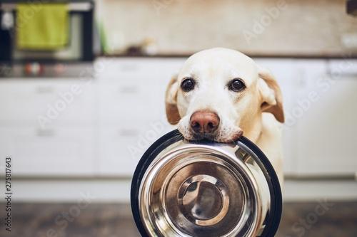 Canvas Print Dog waiting for feeding