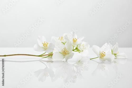Fotografia fresh and natural jasmine flowers on white surface