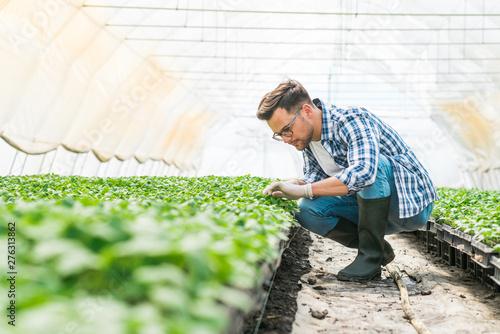 Organic farming concept Fototapet